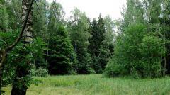 ДДТ, Скляр, Телевизор, Барто, ОтЗвуки Мувыступят сконцертом взащиту Химкинского леса